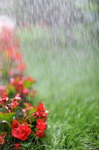 Sprinkler System Companies